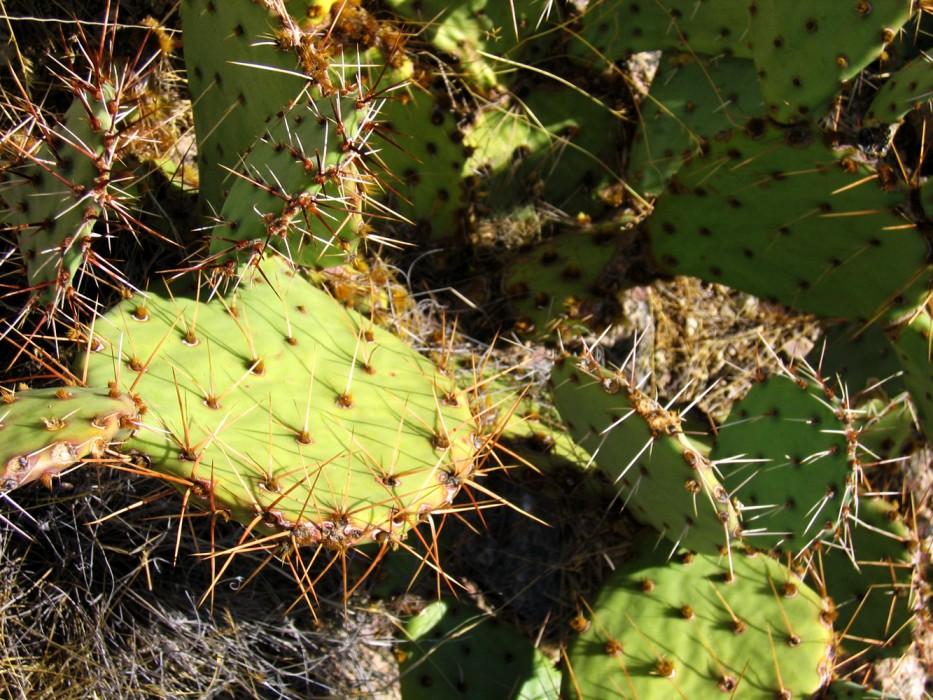 Albuquerque (2005)