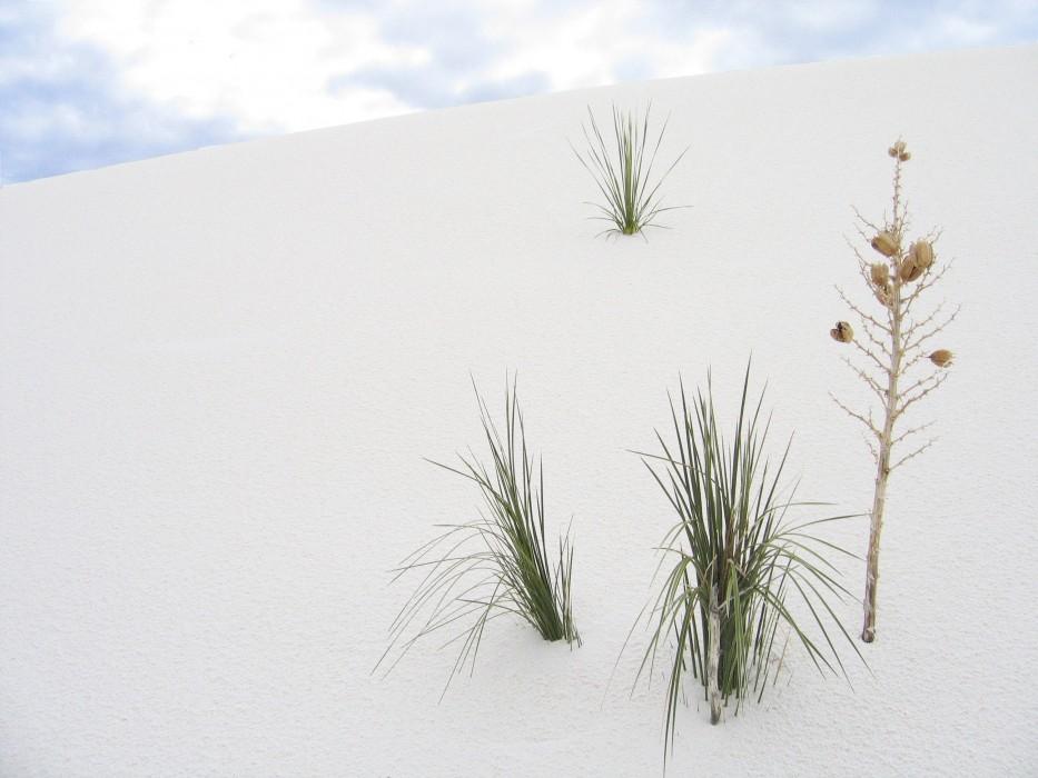 White Sands National Monument (2005)