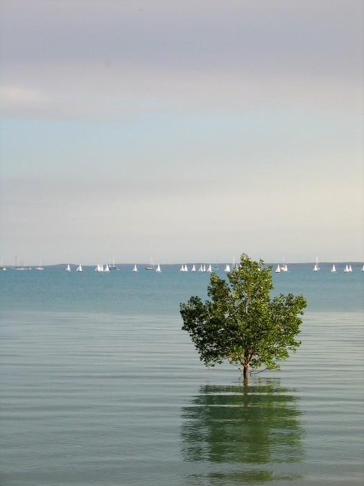 mangrove, Darwin (2005)