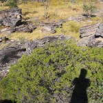 self portrait, Kakadu National Park (2005)