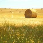 hay field, Nebraska (2003)